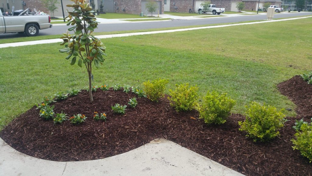 Flower Bed Clean Up