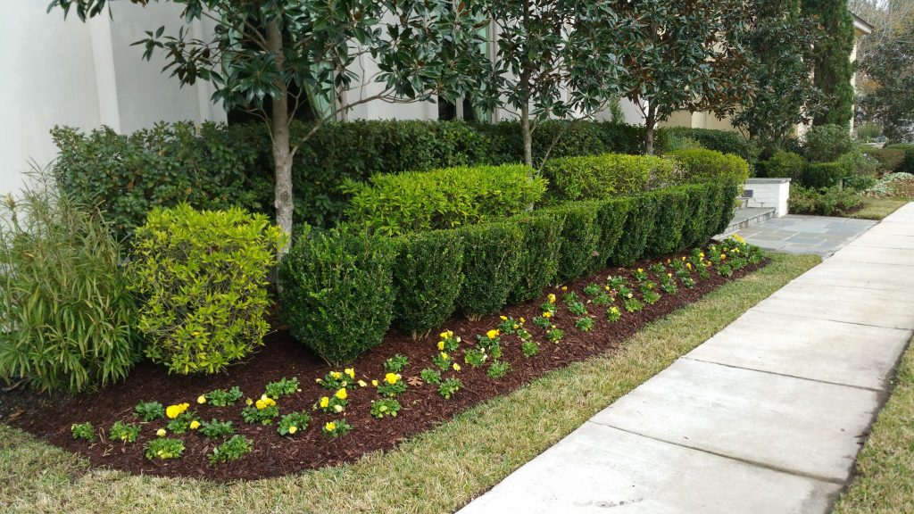 flower bed clean up and landscape renovation in baton rouge